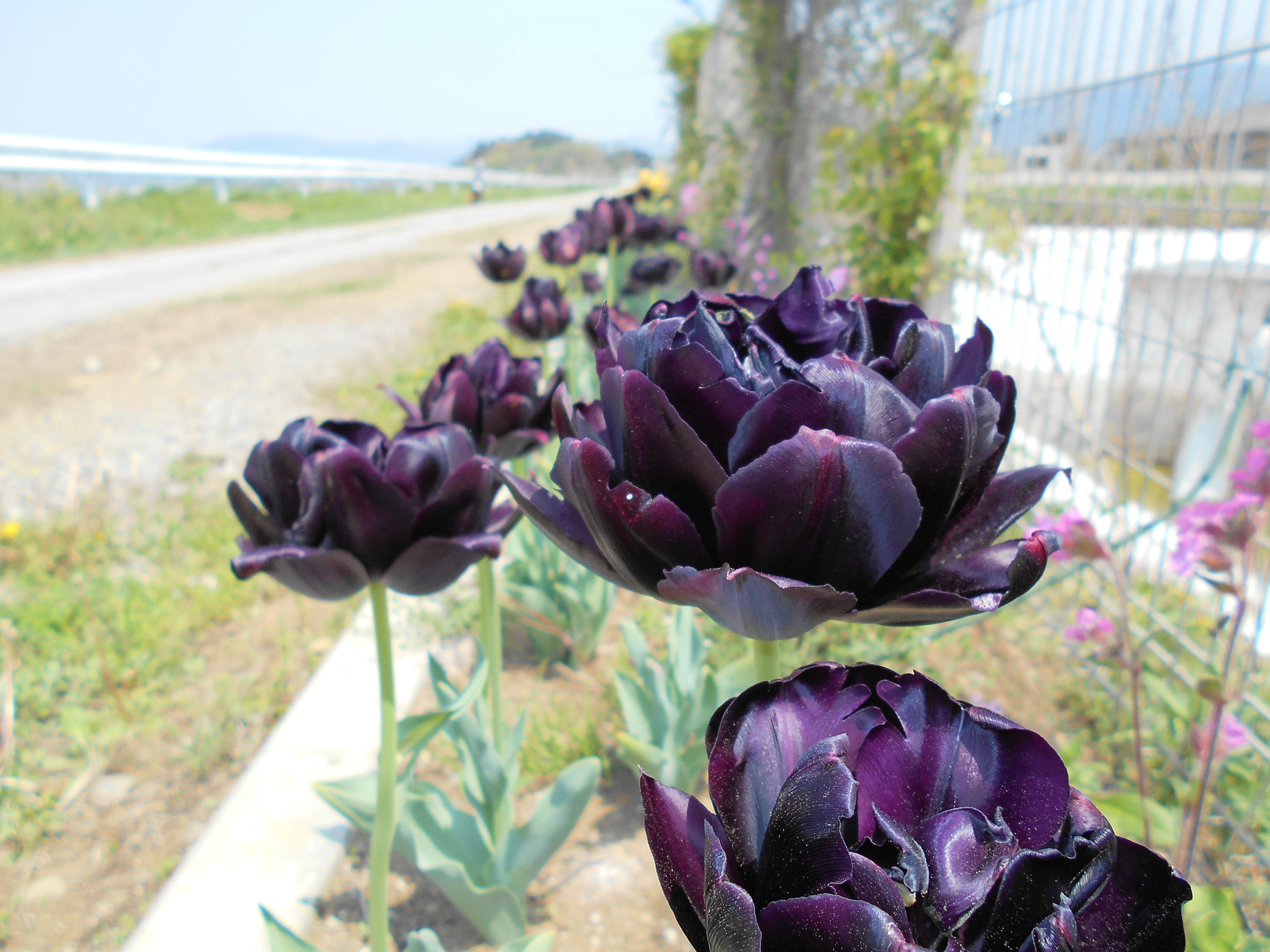 http://chichibu-med.jp/news/DSCN0113.JPG