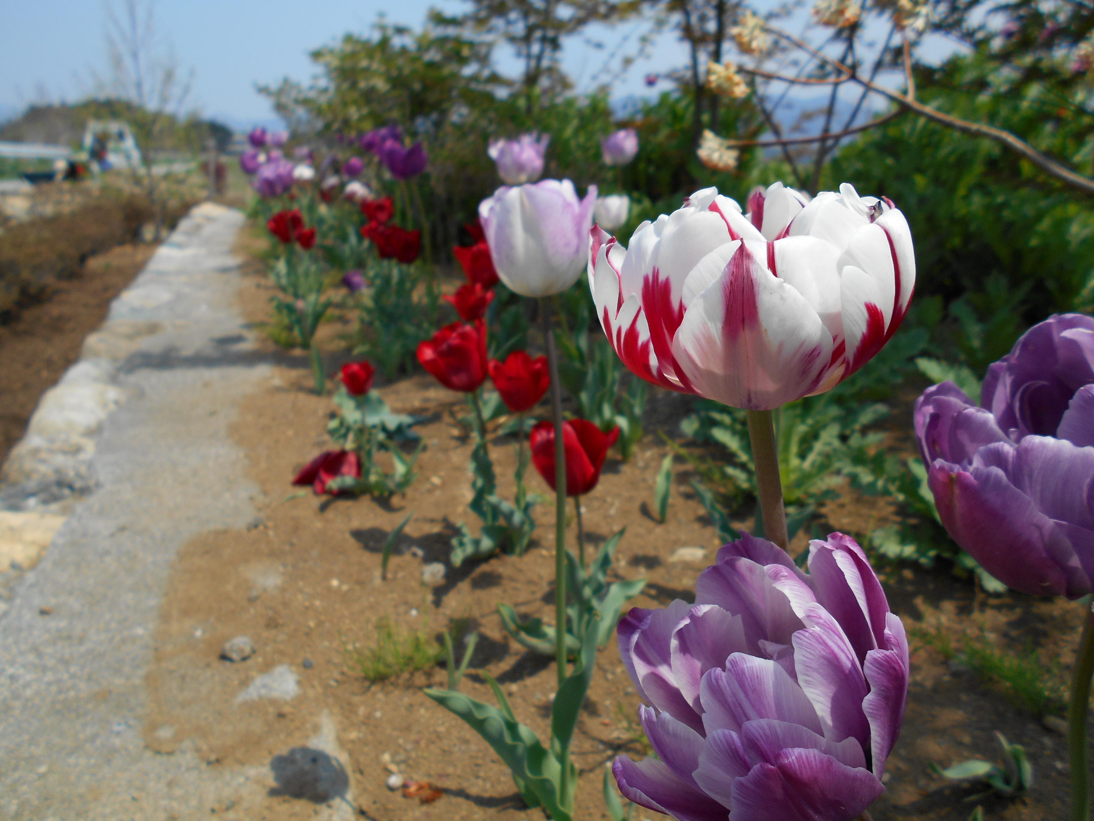 http://chichibu-med.jp/news/DSCN0118.JPG