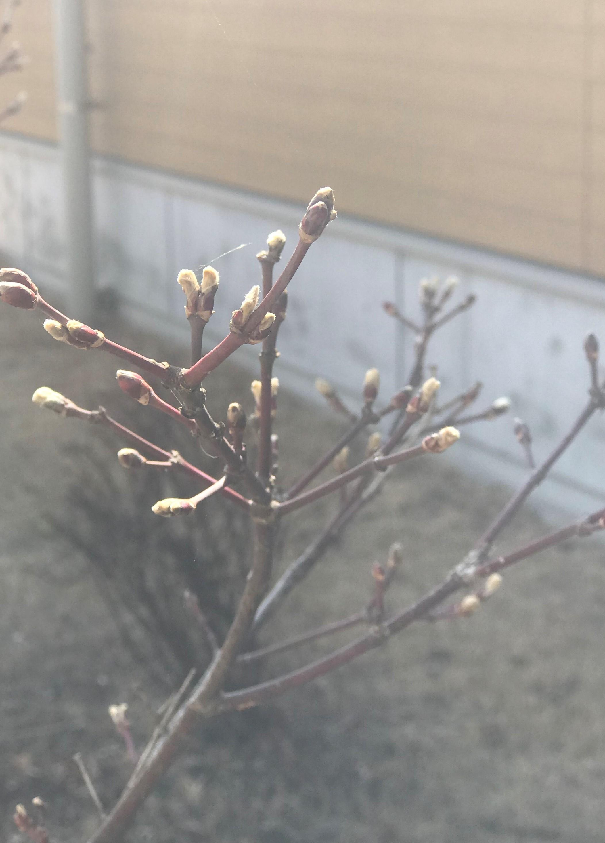 http://chichibu-med.jp/news/IMG_9043.JPG